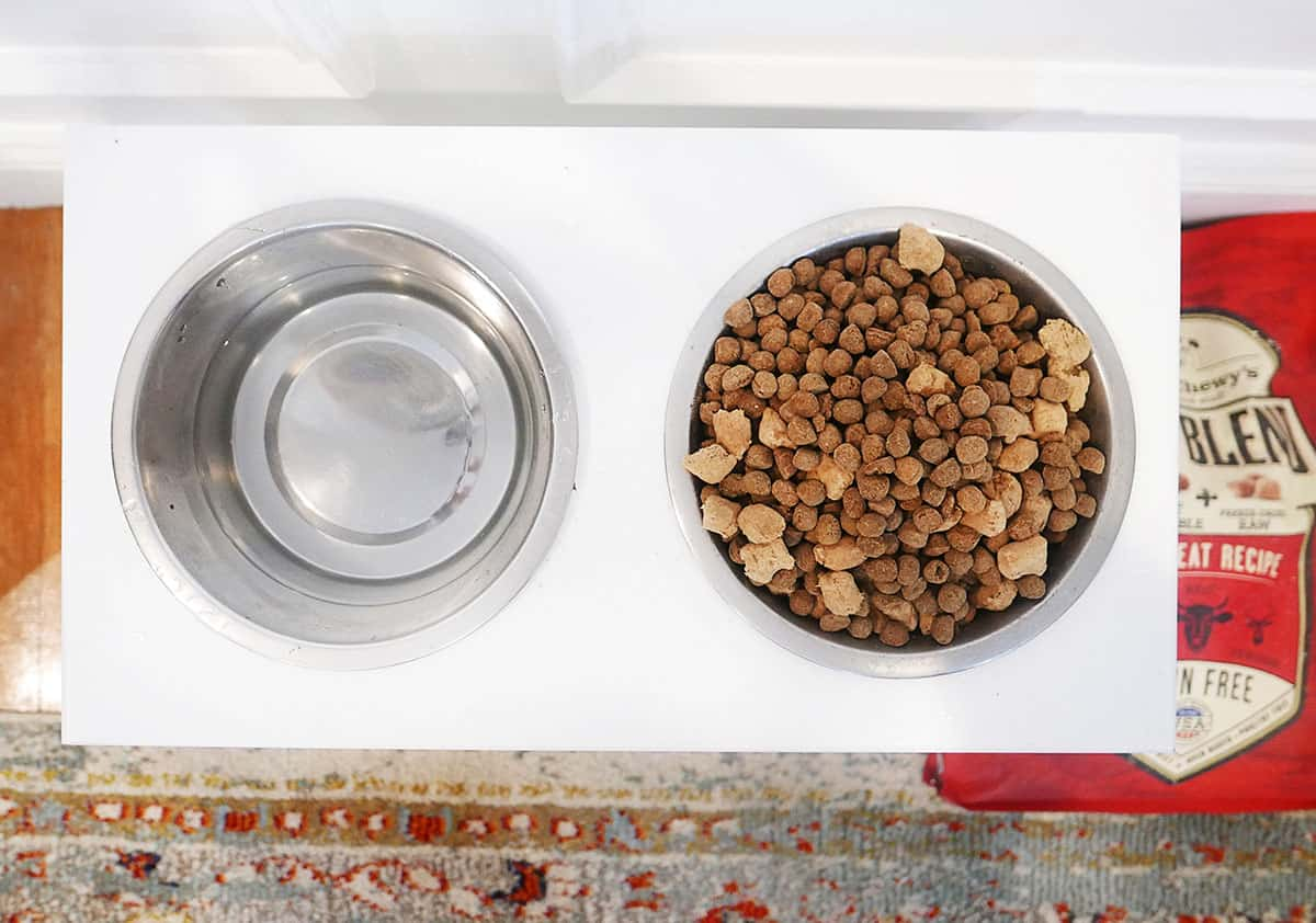 Jax for Stella & Chewy's: The Best Food For Your Dog
