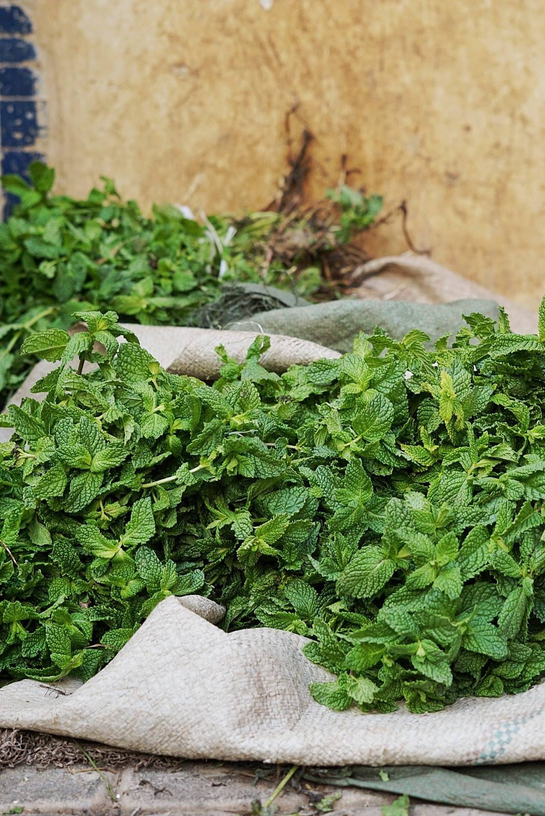 Buying Fresh mint in Fes Morocco