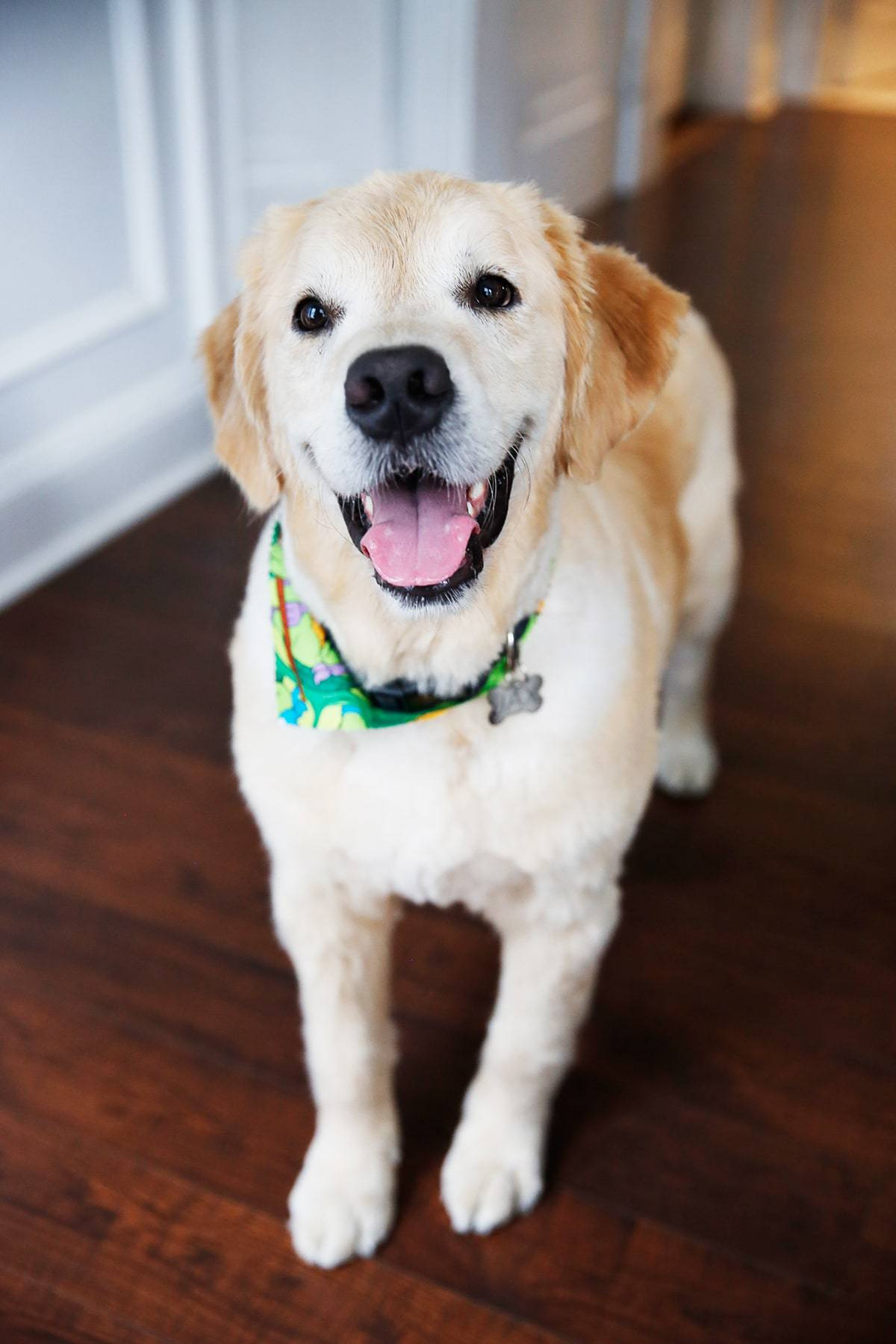 Jax turns 4