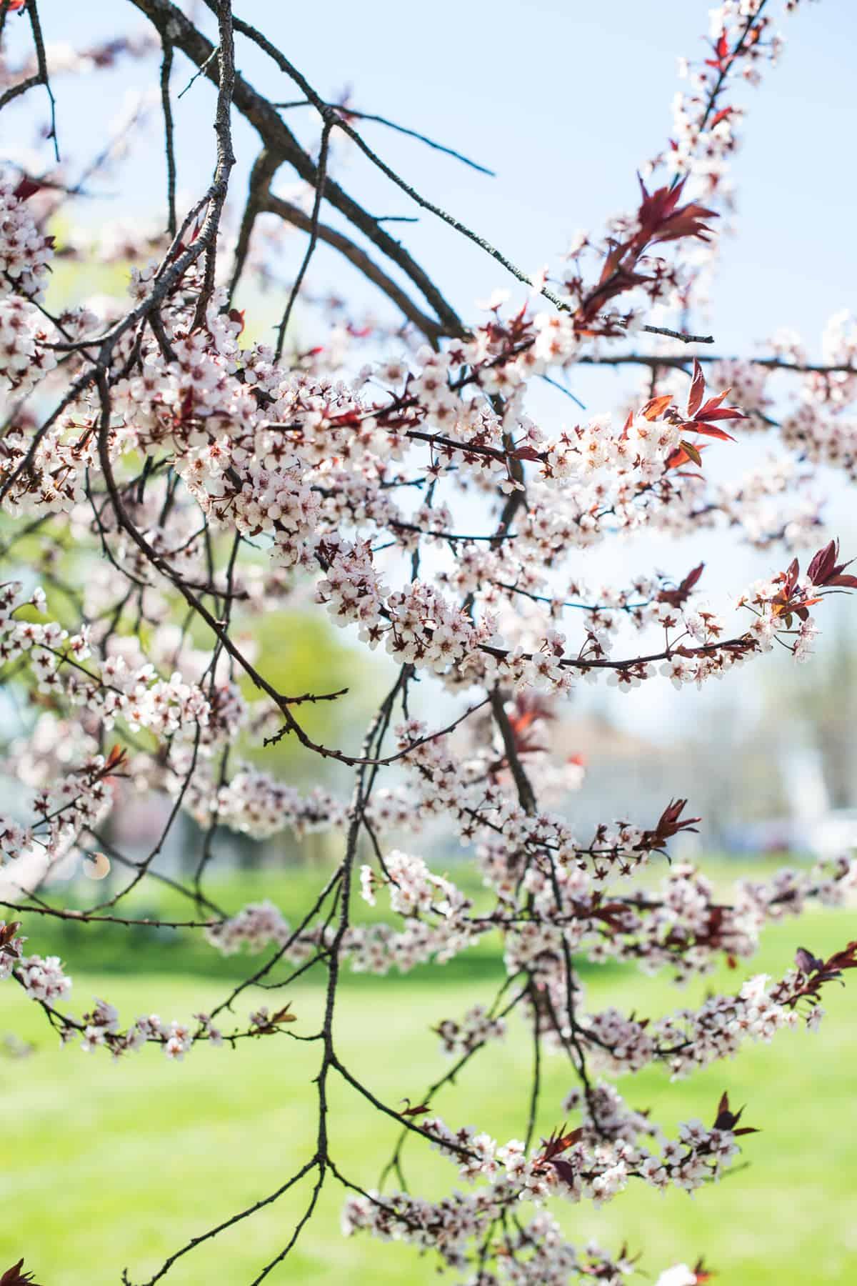 Flowers in Bloom April