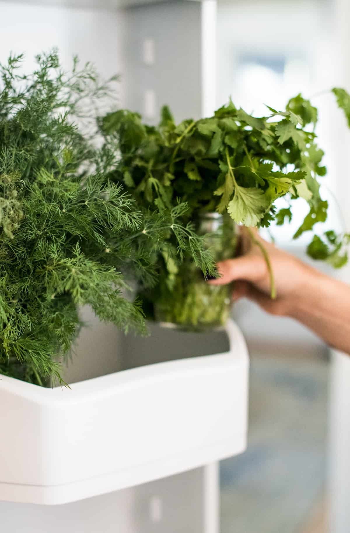 How to Store Fresh Herbs in the Refrigerator