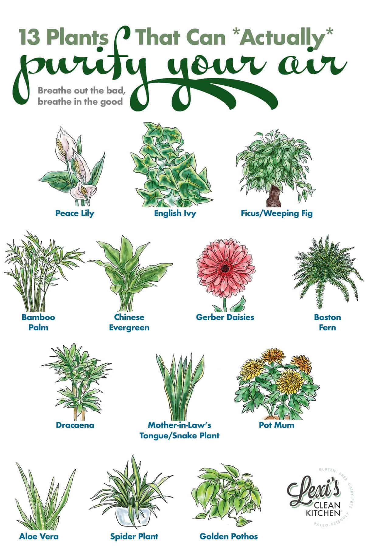 13 of the Best Plants for Air Quality at Home - Lexi's Clean ... Names Of Indoor House Plants To S And Pets Unsafe on
