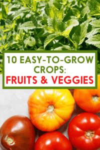 Tomatoes are easy to grow crops.