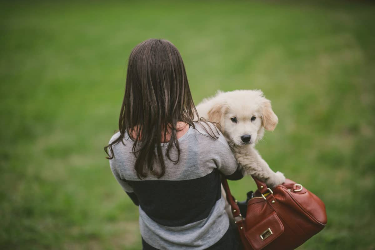 Woman caring a golden retriever puppy and a purse.