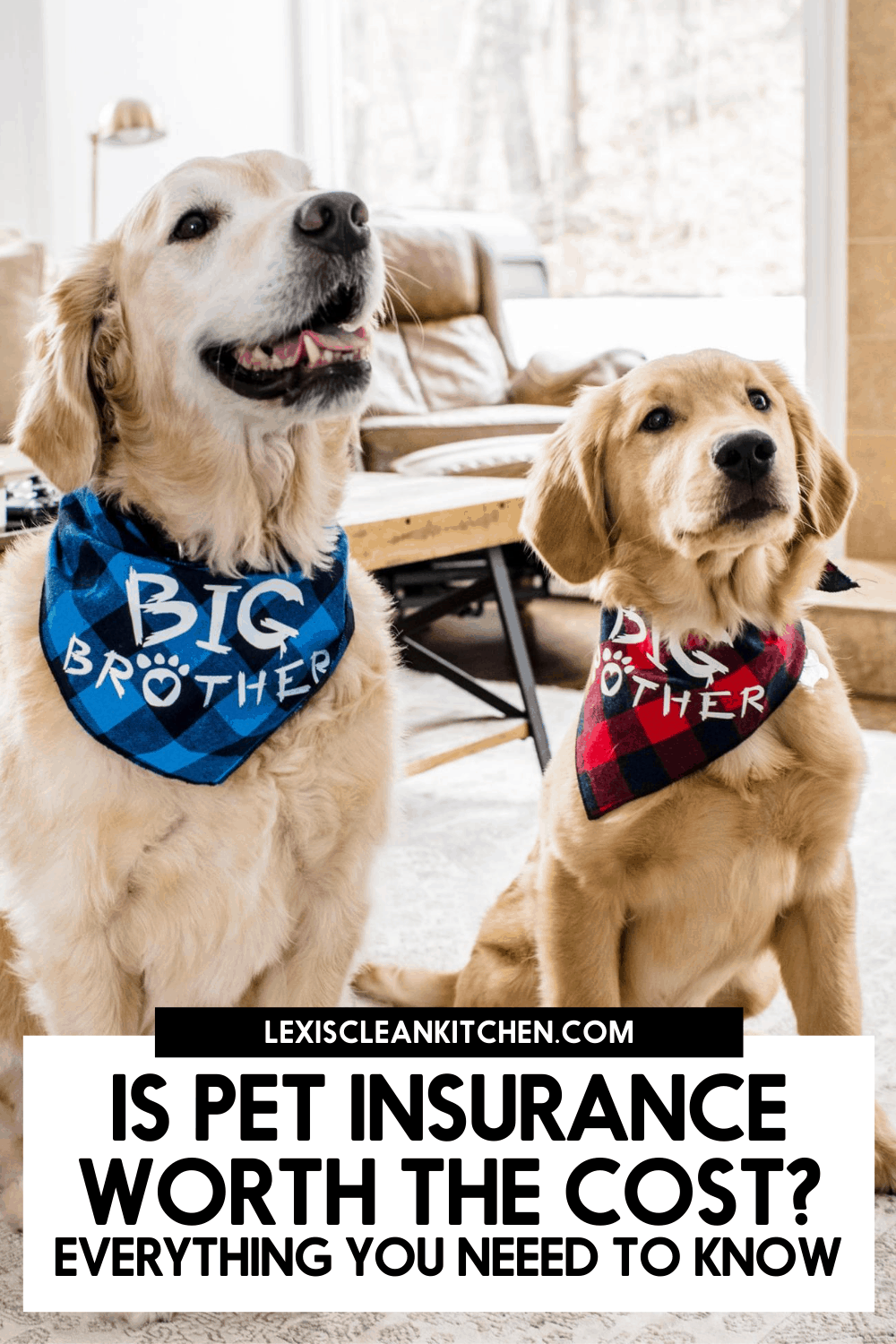 Two dogs who use pet insurance.